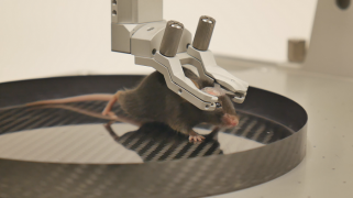 Mouse head-fixed in 20 degree tilted clamp - Mobile HomeCage
