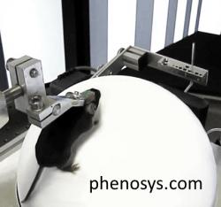 Phenosys' Jetball