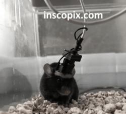 Inscopix' head-mounted microscope