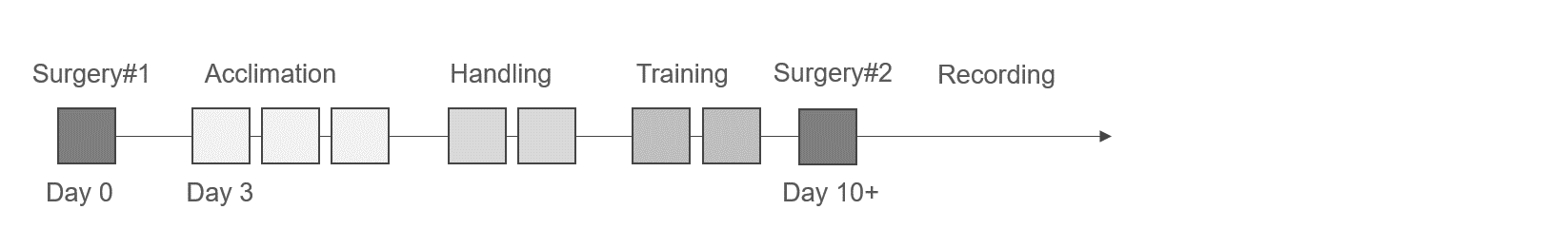 Training timeline for ephys recordings in awake mice